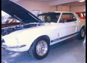 1967 FORD MUSTANG GT 350 CLONE COUPE -  - 19497