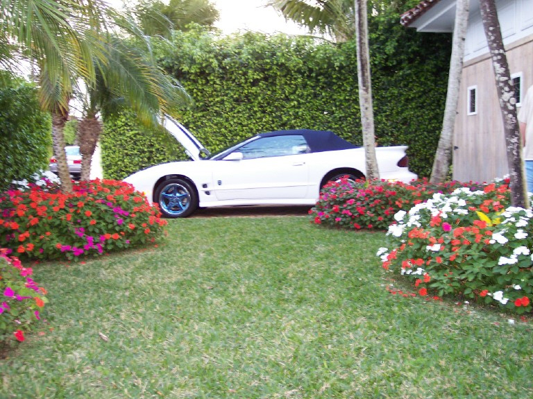 1999 PONTIAC FIREBIRD 30TH ANNIVERSARY EDITION CONVERT - Side Profile - 20738