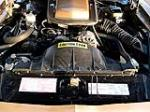 1981 PONTIAC TRANS AM 2 DOOR COUPE - Engine - 101702